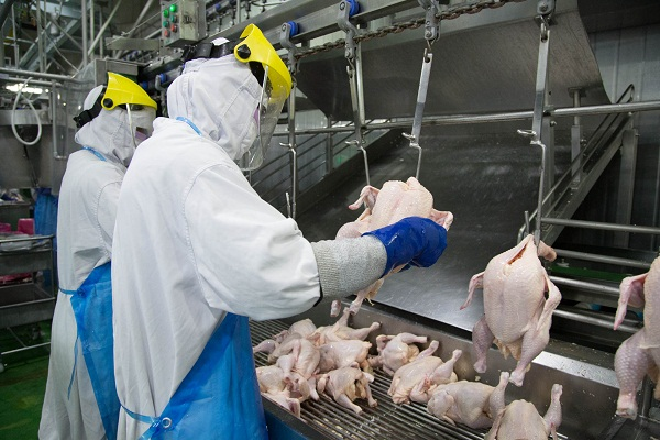 T6/2017 - Tuyển 50 nữ Kiểm tra và đóng gói thực phẩm thịt gà làm việc tại Tỉnh Miyazaki Nhật Bản