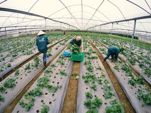 T9/2017 - Tuyển gấp 12 nữ Đơn hàng Nông nghiệp: Trồng rau quả trong nhà kính tạitỉnh AichiNhật Bản